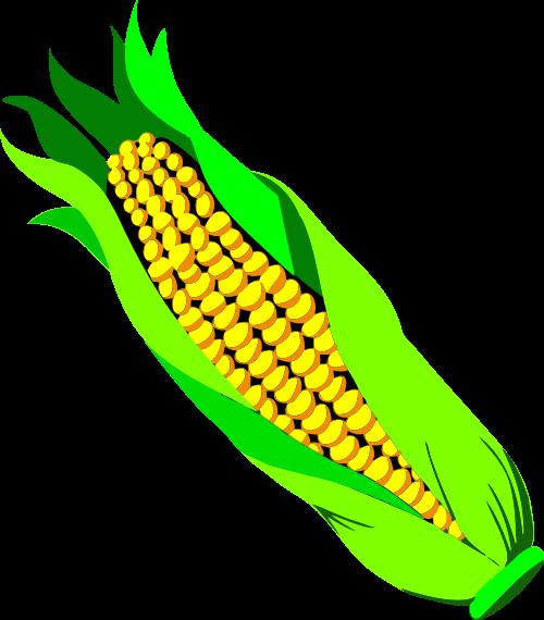 500x570 Fileear Of Corn.svg
