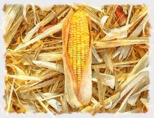 300x230 Sweet Corn Paintings Fine Art America