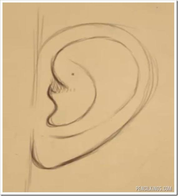 570x629 How To Draw An Ear From The Side Easily