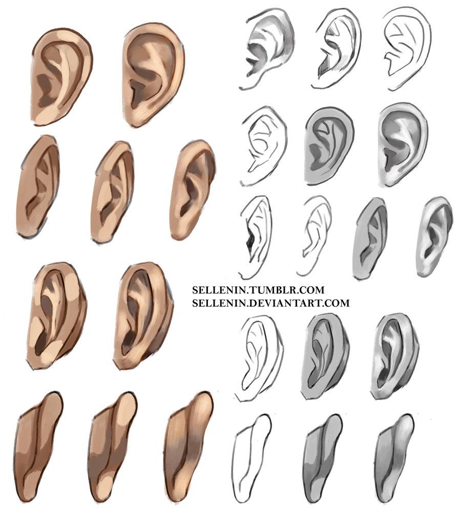 900x1023 Tutorial Body Ears On Drawing Tutorial