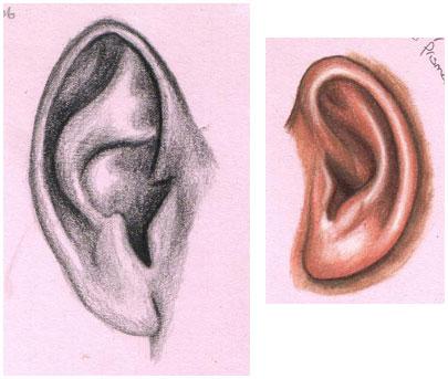 405x343 Shells Daily Drawing Edm Challenge