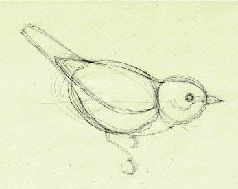 347x275 How To Draw Birds And Master Feathers In 4 Simple Steps Mark