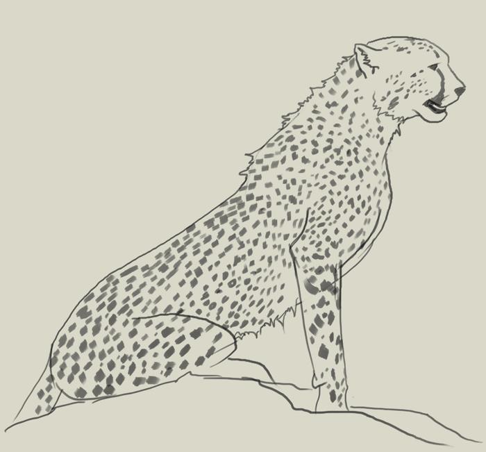 Cheetah sitting down drawing - photo#30