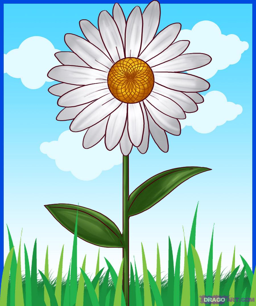 900x1077 Drawing Of A Daisy How To Draw A Daisy Flower Daisy Flower Easy