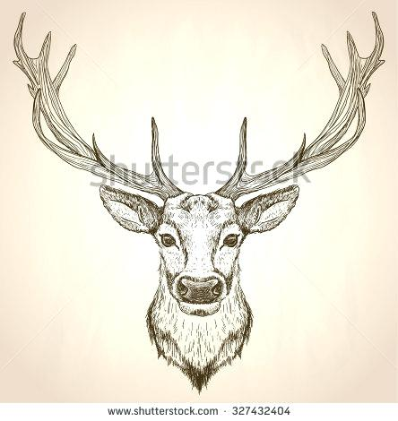 444x470 Drawing Reindeer Hand Drawn Graphic Sketch Illustration