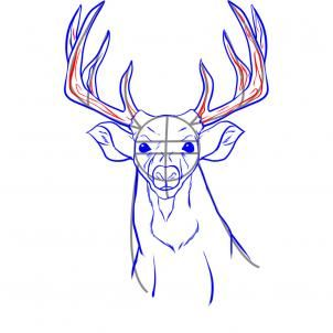 302x302 How To Draw A Realistic Deer Step 5 Animals Deer