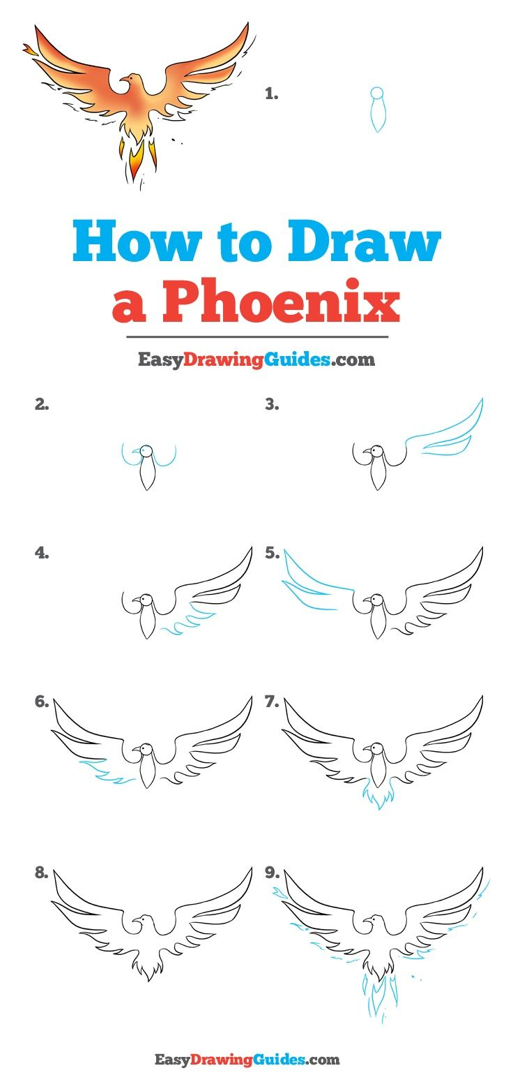 736x1560 How To Draw A Phoenix