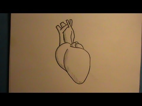 480x360 How To Draw A Real Human Heart