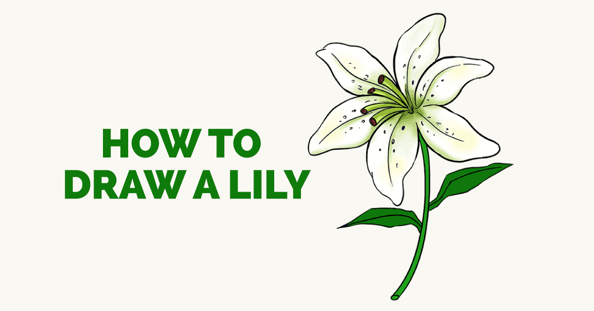 1200x628 How To Draw A Lily Step By Step Drawing Tutorial Easy Drawing