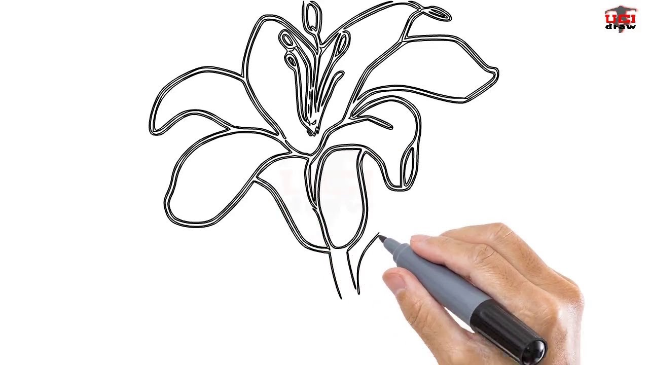1280x720 How To Draw A Lily Easy Step By Step Drawing Tutorials For Kids
