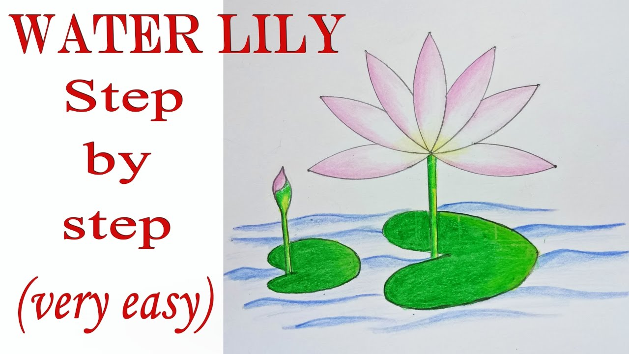 Easy lily drawing at getdrawings free for personal use easy 1280x720 how to draw water lily step by step very easy izmirmasajfo Gallery