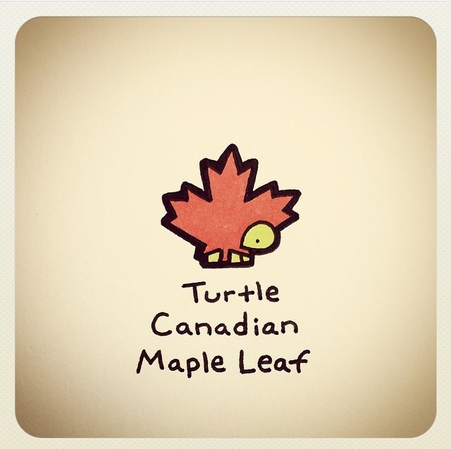 640x637 Turtle Canadian Maple Leaf Turtles Canadian Maple
