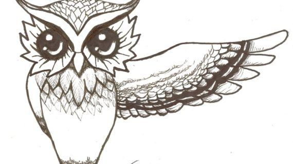 570x320 Owl Drawings Easy Owls On Pinterest And