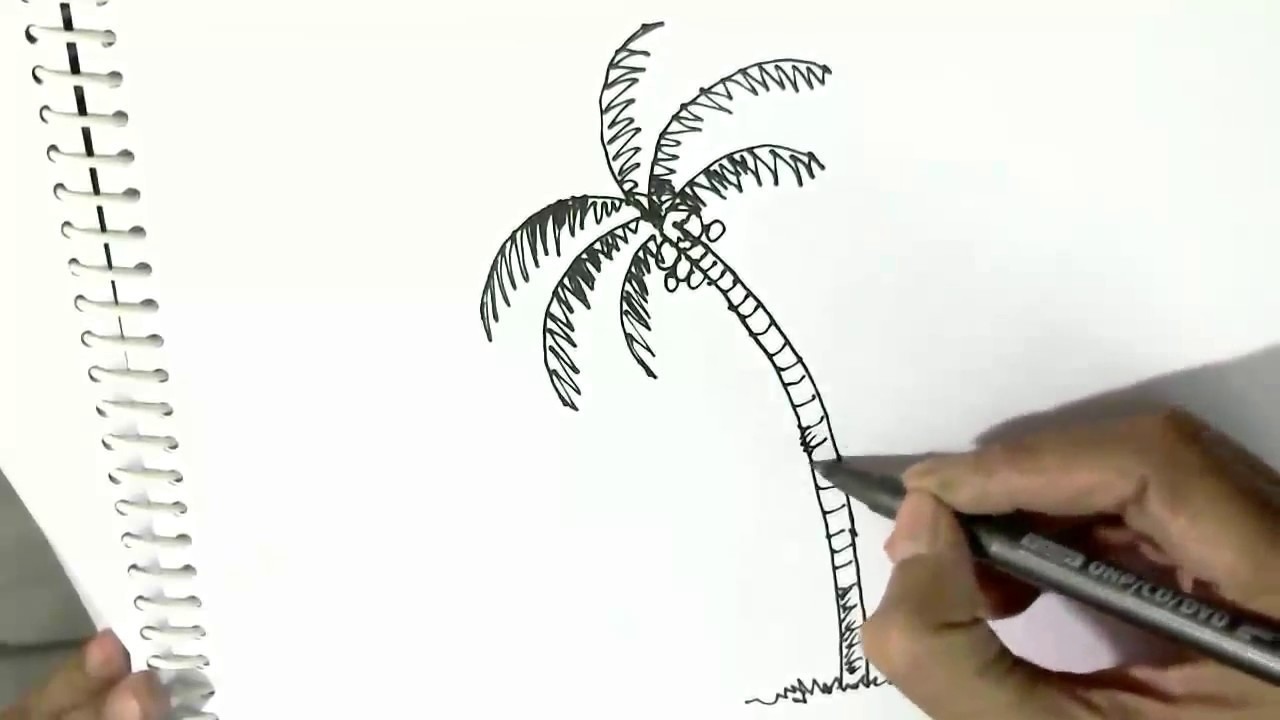1280x720 How To Draw A Palm Or Coconut Tree