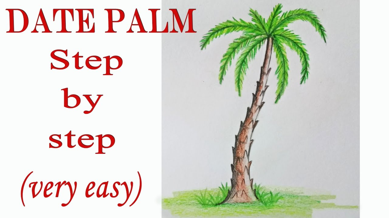 1280x720 How To Draw A Date Palm Step By Step (Very Easy)