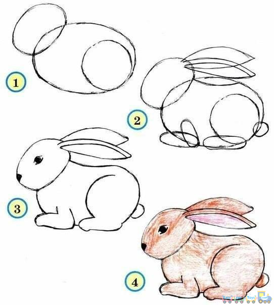 542x604 drawing simple animal rabbit pics simple painting and drawing