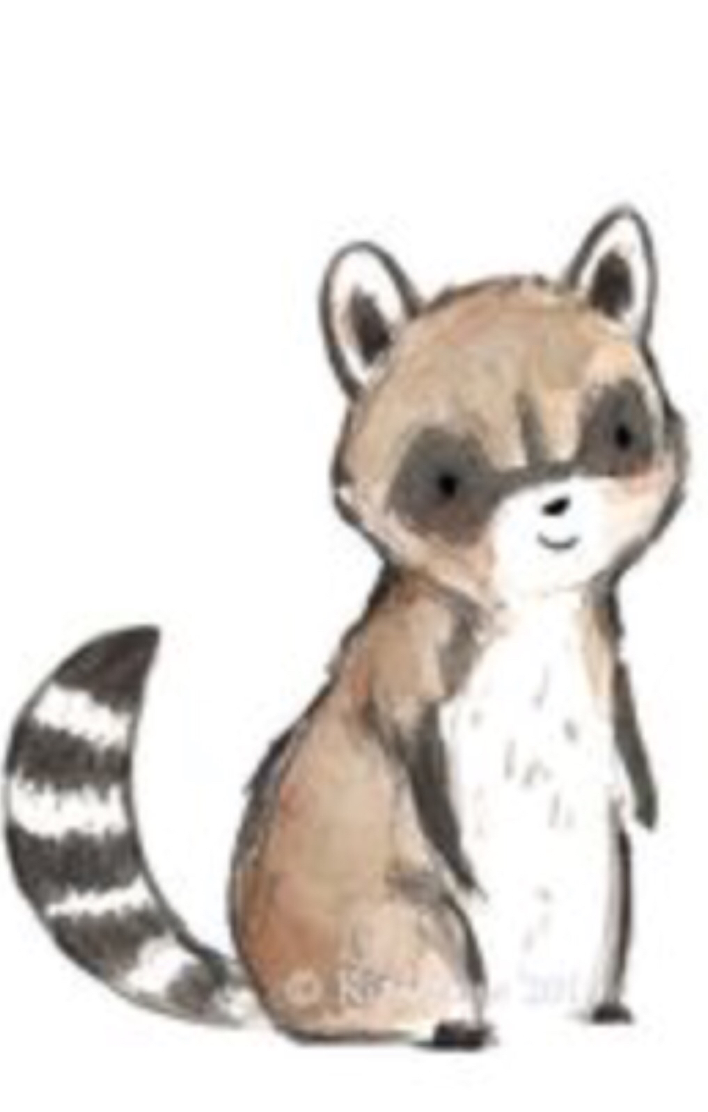 1017x1598 Cute Raccoon Drawing Art Easy Drawing Drawing Art