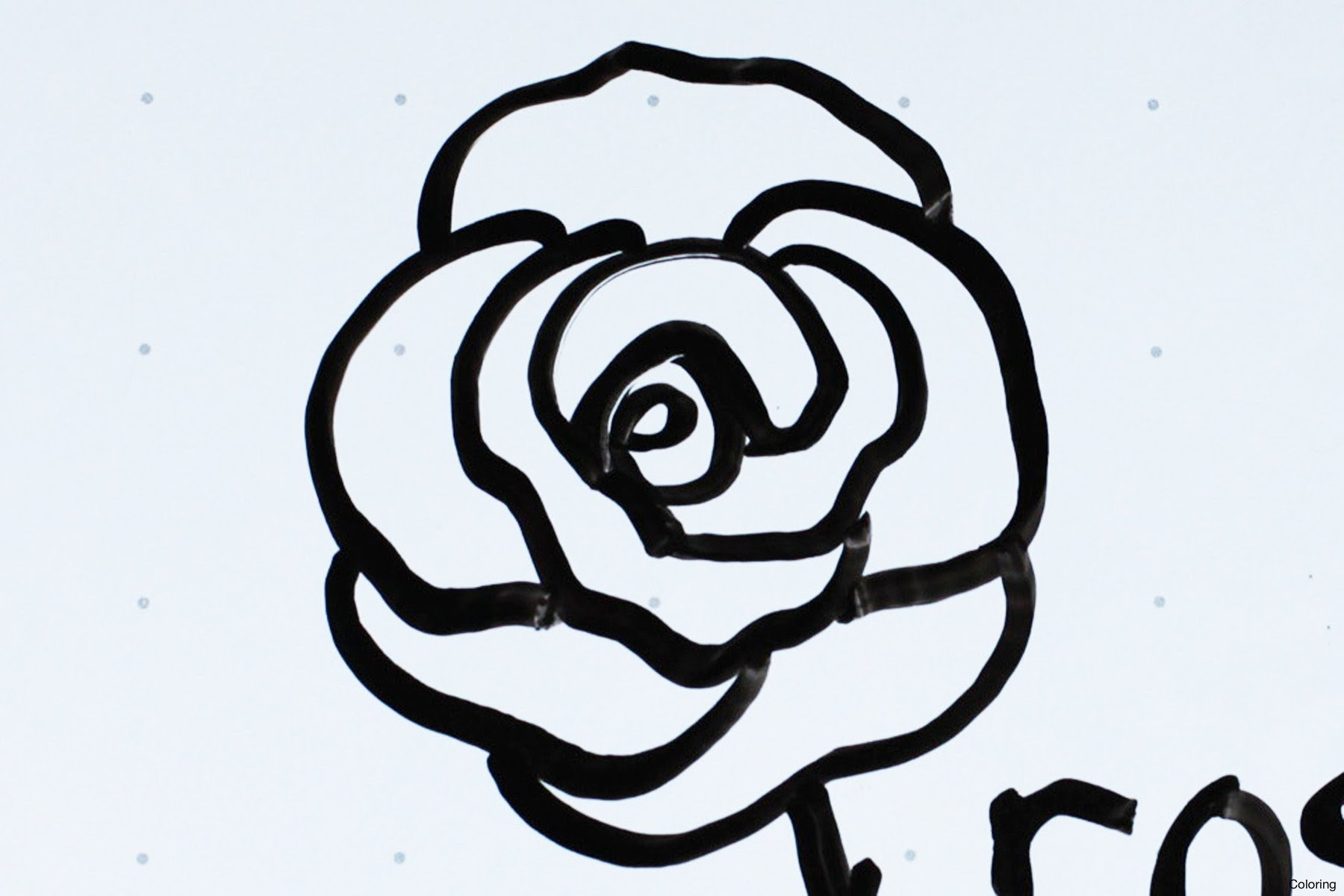 Flower Drawing Rose Easy Flowers Healthy