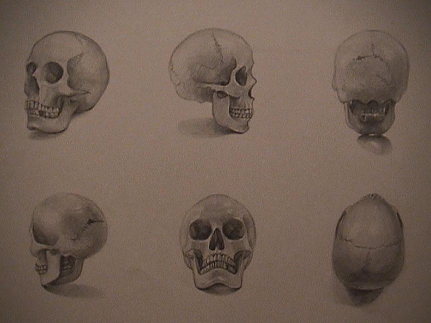 864x648 Drawn Profile Skull