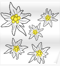 210x230 Edelweiss Drawing Posters Redbubble