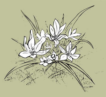 450x413 Edelweiss Simple Hand Drawn Illustration. Royalty Free Cliparts