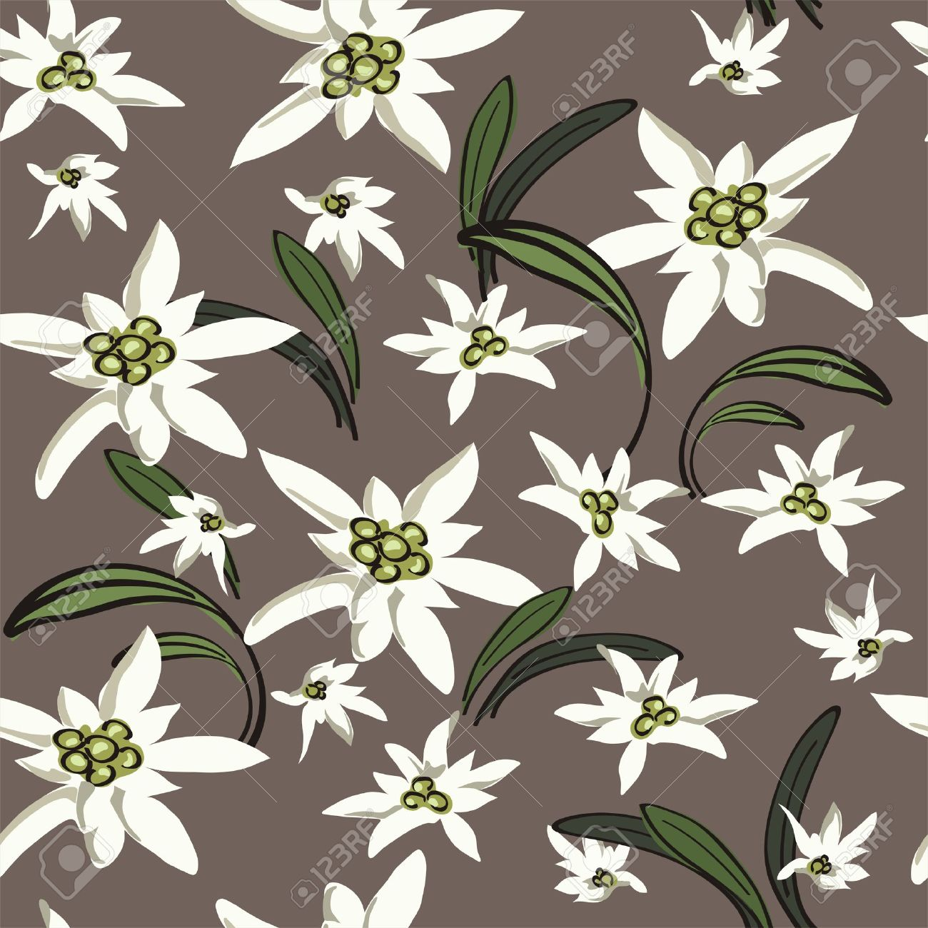 1300x1300 Elegance Seamless Background With Edelweiss Flowers Floral Vector