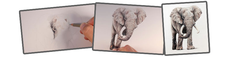 800x200 Draw an Elephant with Colored Pencils