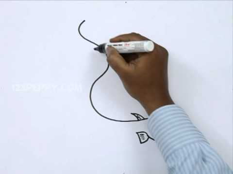 480x360 How To Draw An Electric Eel
