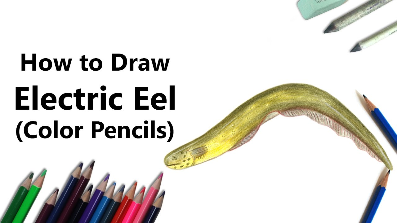 1280x720 How To Draw An Electric Eel With Color Pencils [Time Lapse]