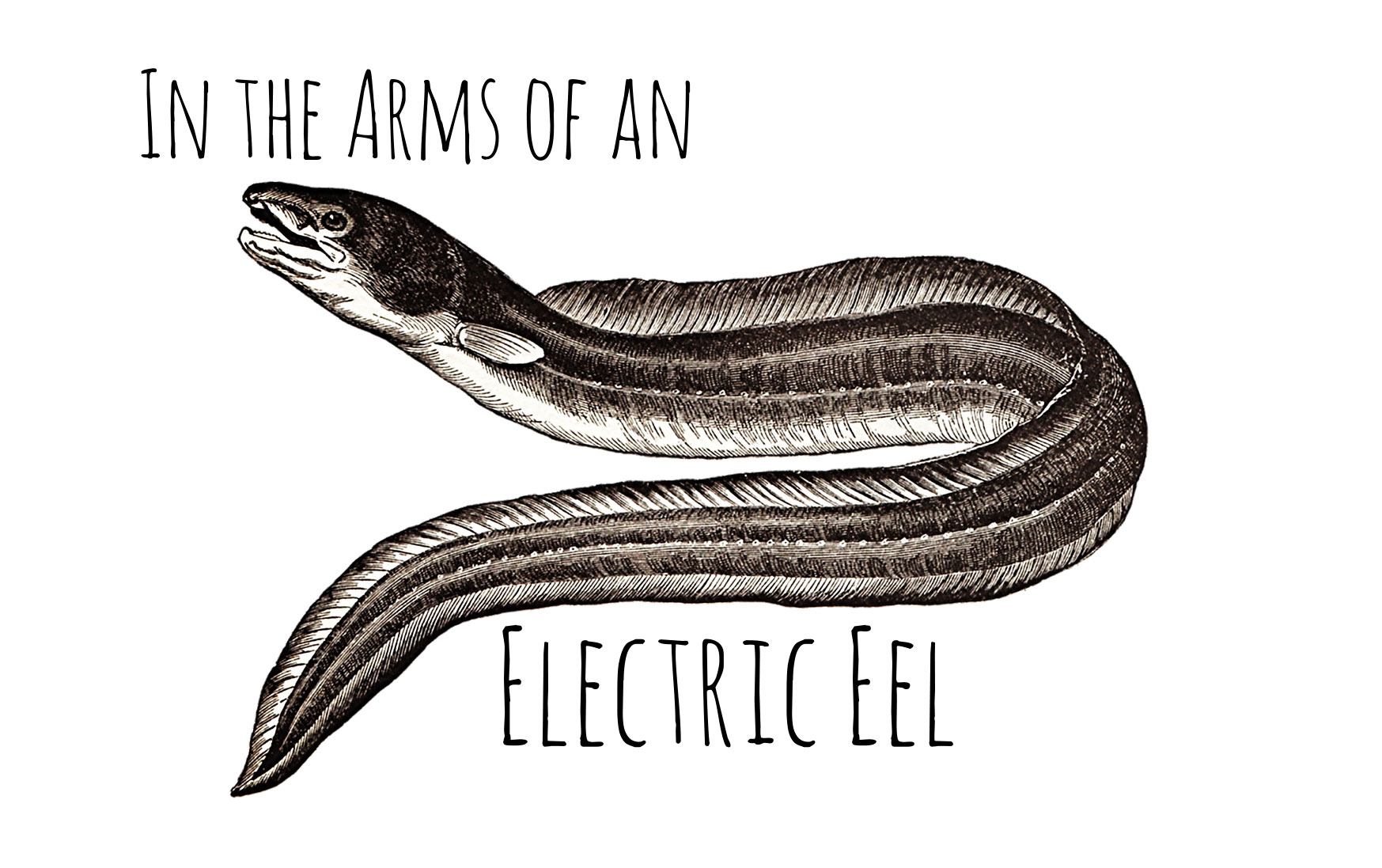 1747x1097 In The Arms Of An Electric Eel By Anna Keeler Cleaver Magazine