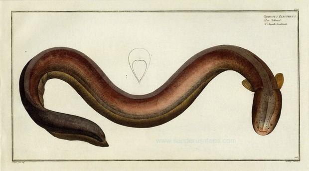 620x343 Natural History