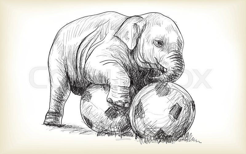 800x503 Baby Elephant Playing Football, Sketch And Free Hand Draw