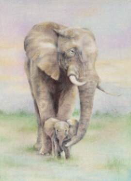 270x372 Elephant Baby Drawing