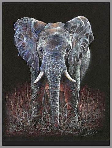 366x483 African Elephant