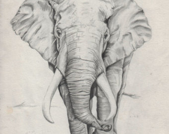 340x270 Elephant Drawing Etsy