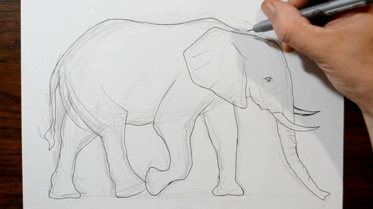 1280x720 How to Draw an Elephant