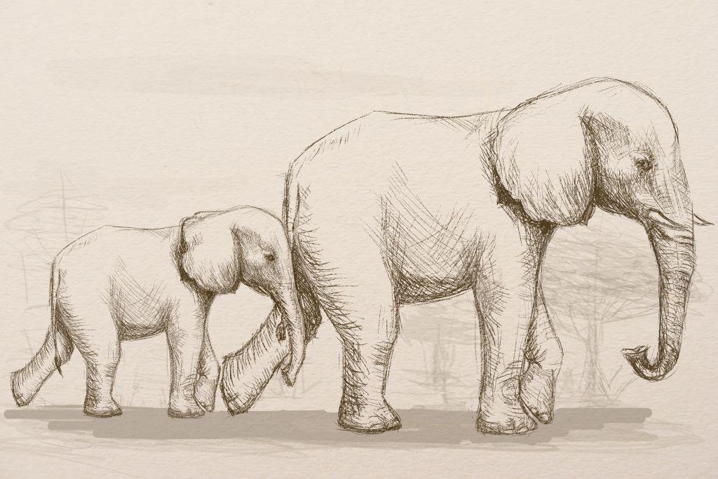 1024x683 Elefants.jpg