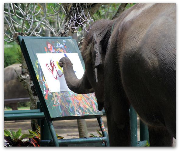 592x503 A Magical Elephant Encounter