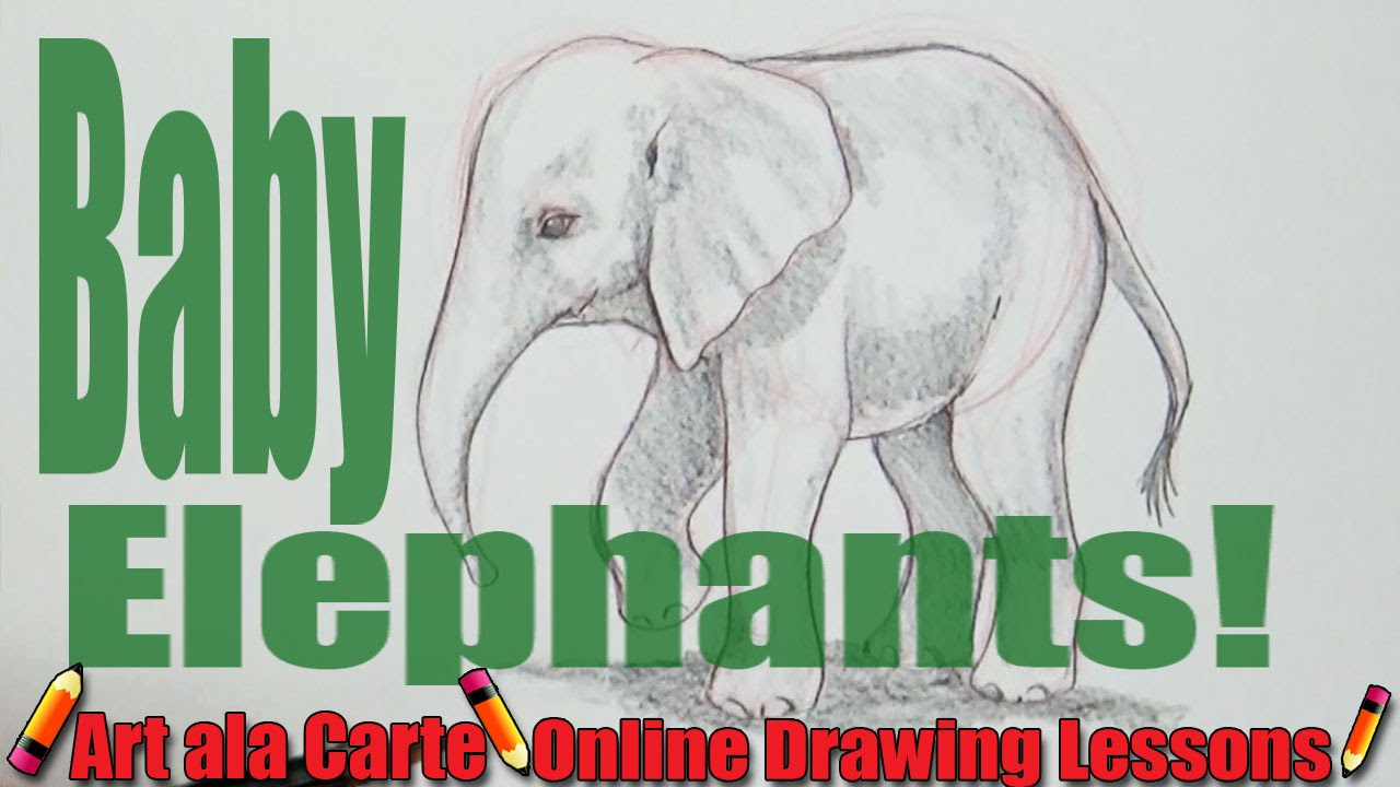 1280x720 Drawing A Baby Elephant