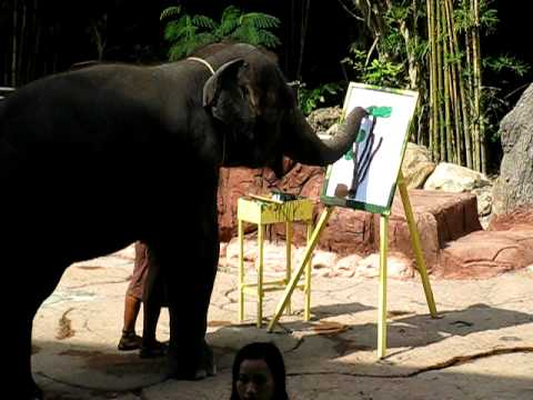 480x360 Elephant Is Drawing A Tree, Thailand Zoo