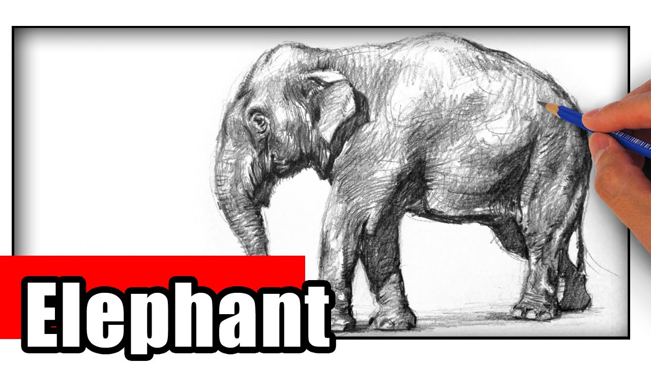 1280x720 How To Draw An Elephant The Easy Way