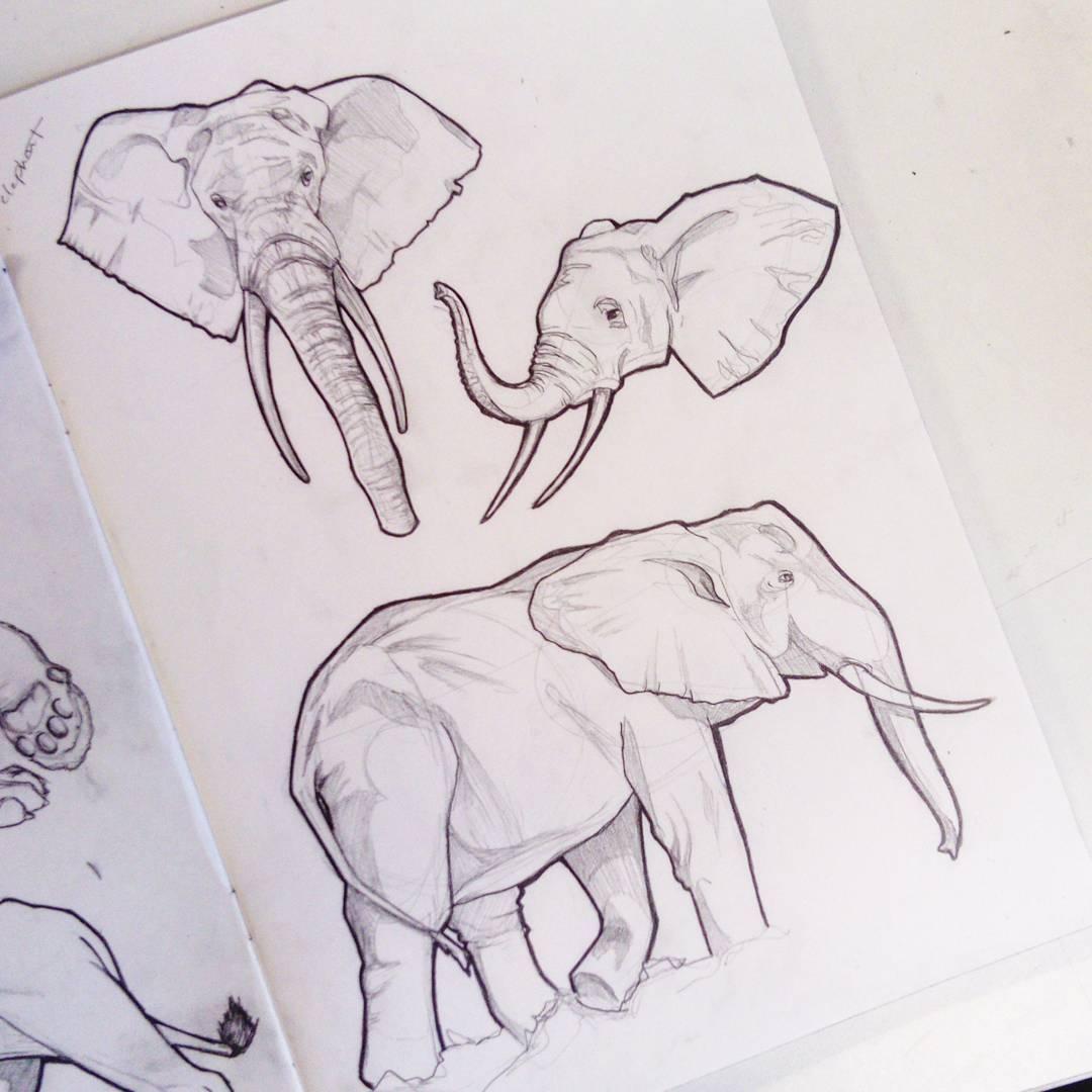 1080x1080 Elephant Bois