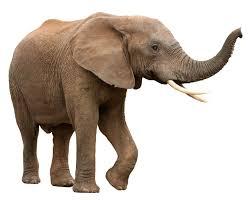 252x200 Elephant Dream Meaning And Interpretation
