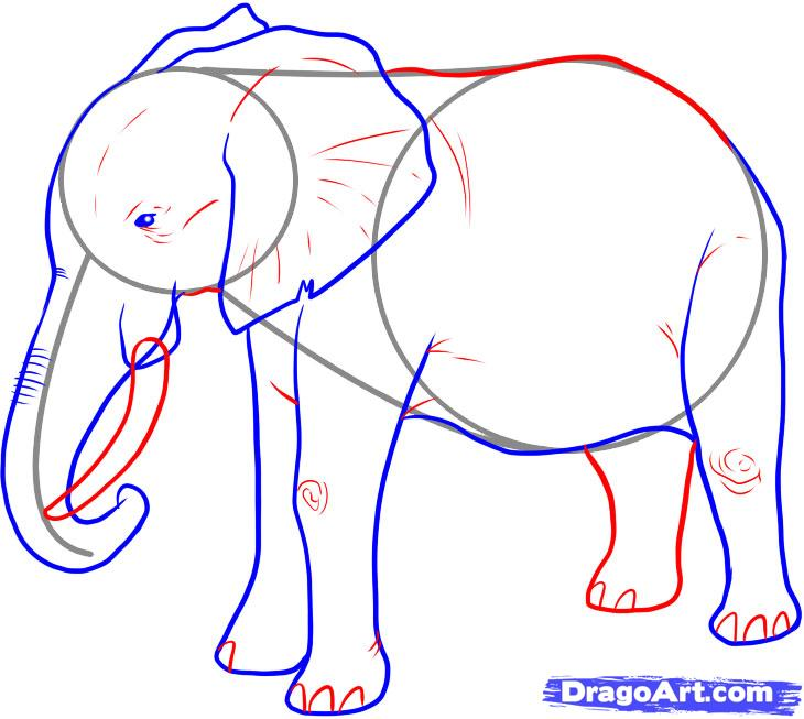 730x653 How To Draw An Elephant, Step By Step, Safari Animals, Animals