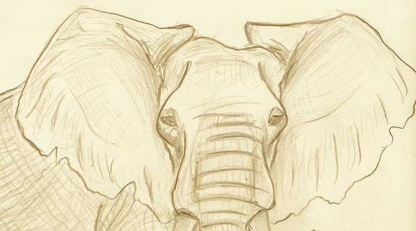 Elephant ears drawing at getdrawings free for personal use 600x333 elephant ears by elephantartistmarie on deviantart ccuart Images