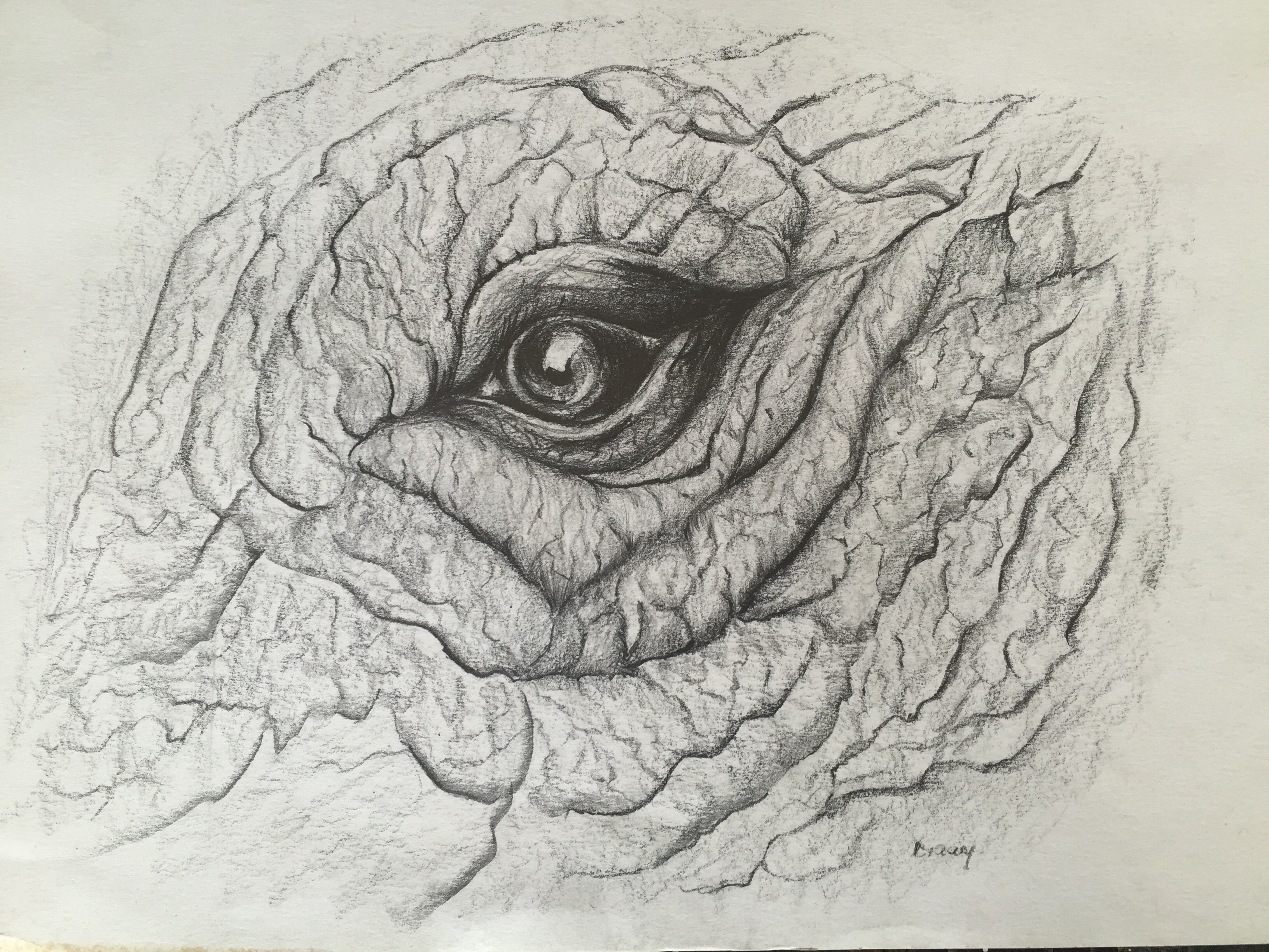 Elephant Eye Drawing At GetDrawings.com | Free For Personal Use Elephant Eye Drawing Of Your Choice
