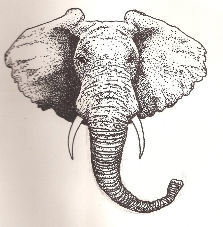 Elephant Front View Drawing at GetDrawings | Free download