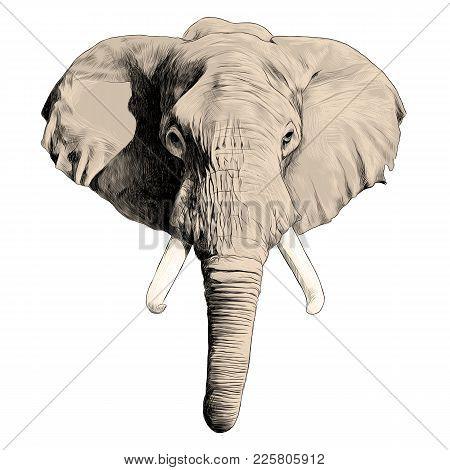 450x470 Elephant Head Sketch Vector Vector Amp Photo Bigstock