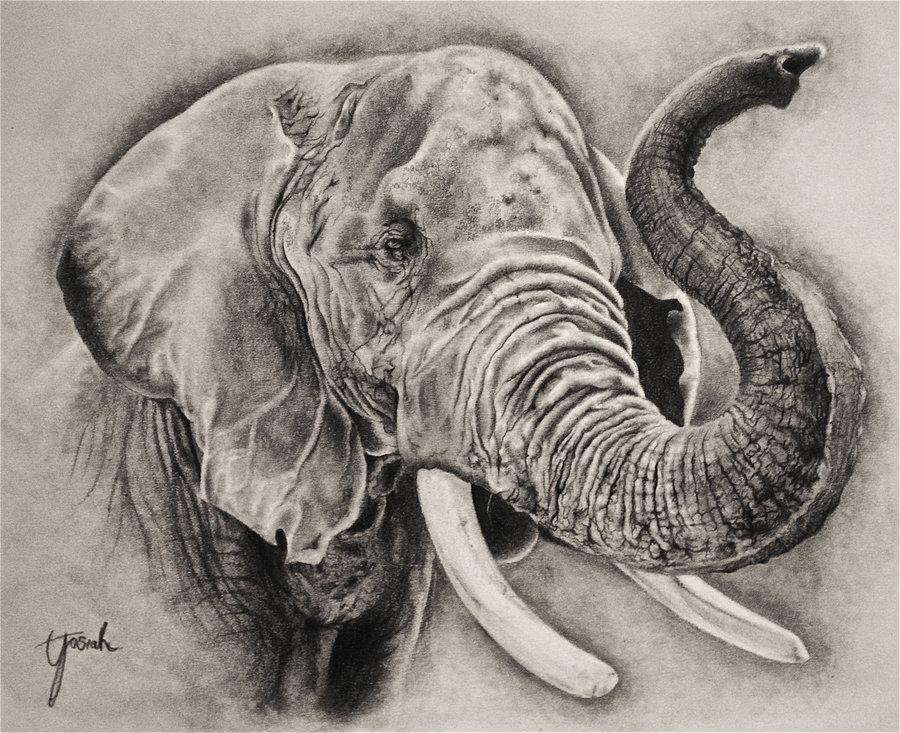 900x733 Elephant Sketch By Eriatarka24
