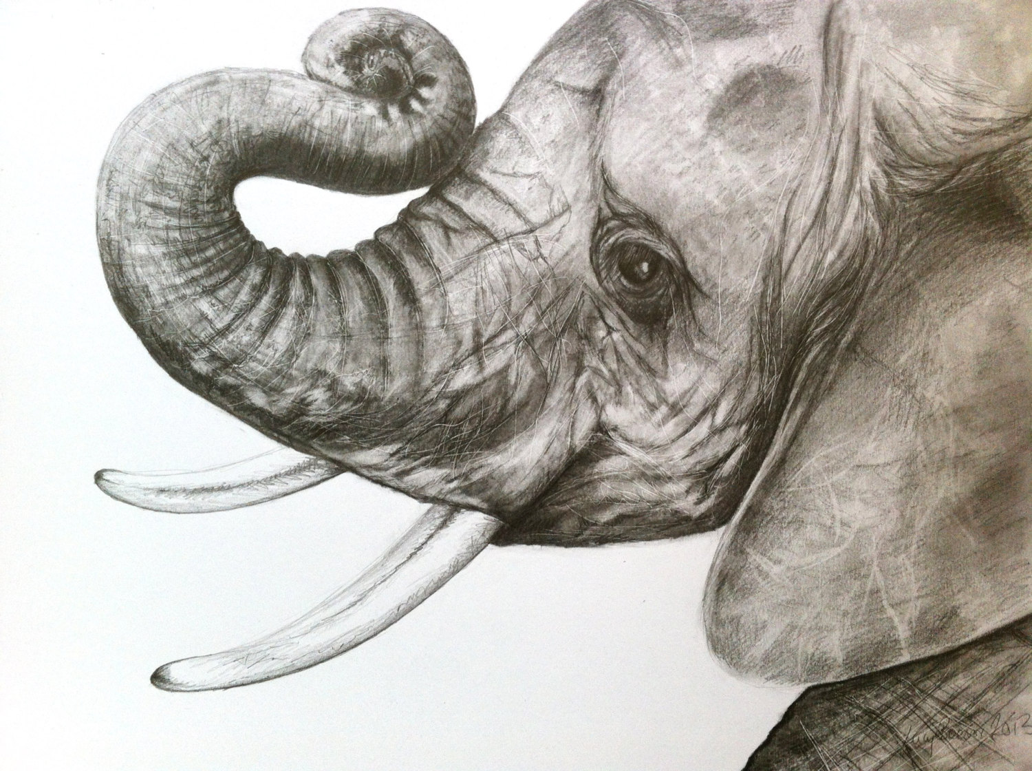 1500x1120 Print Baby Elephant Head Drawing In Graphite